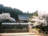 春の圓光寺と桜